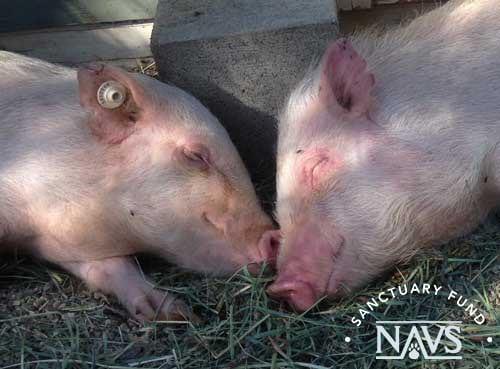 Img New Life Animal Sanctuary Margie And Geraldine