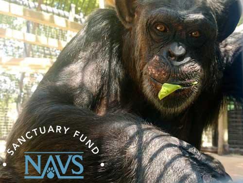 Img Primarily Primates.branded