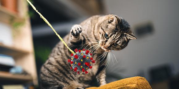 Covid Cat 2 1