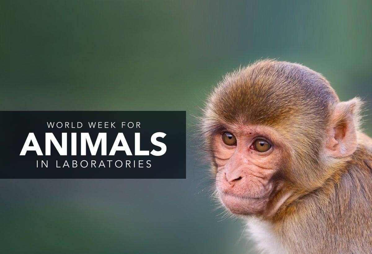 World Week for Animals