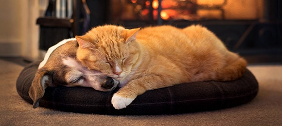 Dog and Cat by Fireplace