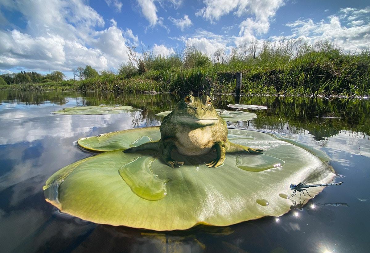 BioLEAP Frog