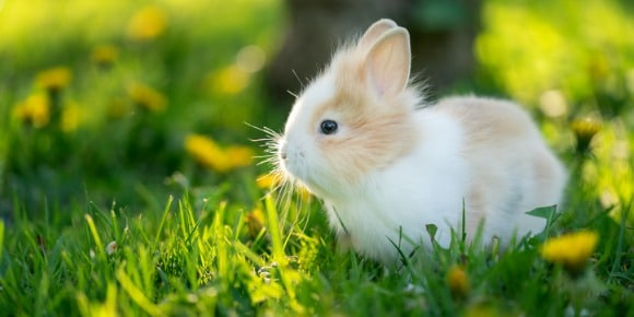 Spotted Rabbit In Sunlight At The Green Grass On The Garden Picture Id1271893635