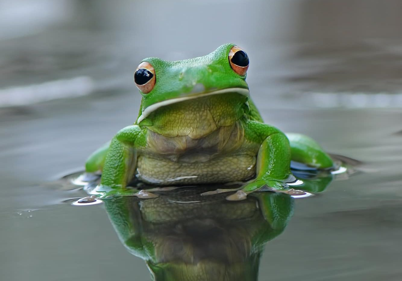 Frog Cropped